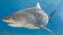 Νεαρός Αυστραλός ψάρεψε καρχαρία μετά από τρίωρη επική μάχη στον