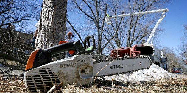 A chainsaw sits in a yard as a crew from Family Tree Care cuts down an ash tree, Monday, March 9, 2015,...