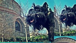 City of Dog : Σκυλιά ποζάρουν μπροστά στα πιο σημαντικά μνημεία της