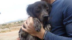 Η Animal Action Hellas φροντίζει για τη βελτίωση της ζωής όλων των ζώων σε κάθε γωνιά της