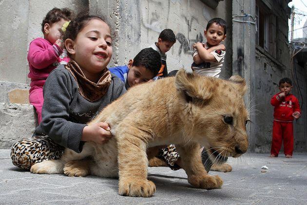 Μια οικογένεια Παλαιστινίων υιοθέτησε 2 νεογέννητα λιονταράκια από τον χρεωκοπημένο ζωολογικό κήπο της