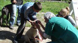 Στειρώστε τα αδέσποτα ζώα της γειτονιάς σας δωρεάν και σώστε τους τη