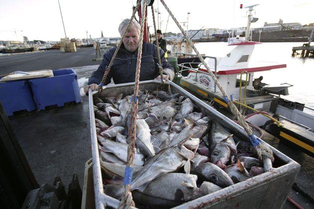 Πως το ψάρεμα μπακαλιάρου έκανε την Ισλανδία να «σνομπάρει» την Ευρωπαϊκή