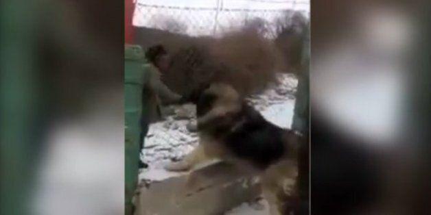 Αυτός είναι ο μεγαλύτερος σκύλος του κόσμου και θυμίζει... αρκούδα