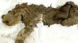 Κουφάρι προϊστορικού ρινόκερου βρέθηκε σε πολύ καλή κατάσταση στη