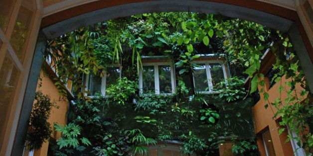 Απίστευτο κι όμως αληθινό: Έφτιαξε μια ζούγκλα... μέσα στο σπίτι