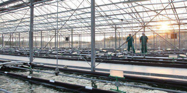 Η θερμοκηπιακή εγκατάσταση παραγωγής σπιρουλίνας στις Σέρρες