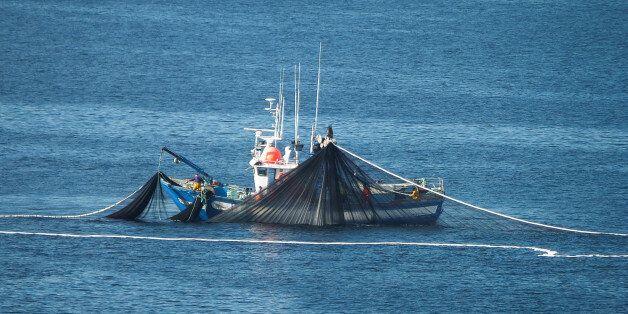 La pesca de cerco consiste, como su nombre indica, en cercar al pez (sardina, anchoveta, jurel y caballa...