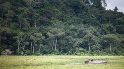 La Norvège va payer le Gabon pour qu'il ne déforeste