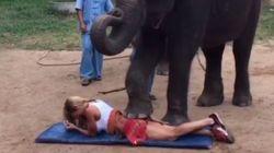 Ελέφαντας της