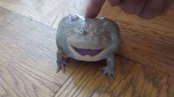 Ο βάτραχος που στριγκλίζει