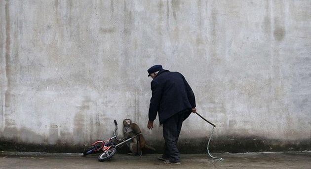 Σπαρακτικές εικόνες από μαϊμουδίτσες που εκπαιδεύονται για το