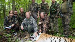 Διπλωματικό επεισόδιο: Οι τίγρεις του Πούτιν λεηλάτησαν αγρόκτημα στη