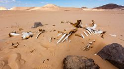 To 2014 κάνει ρεκόρ ως το πιο θερμό έτος εδώ και 130