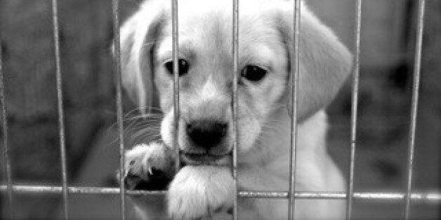 Γιατί Λέμε Όχι Στα Pet