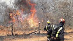 Cuatro bomberos españoles que han luchado contra el fuego en la Amazonía: