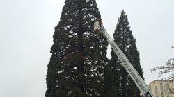 France: Un homme s'est retranché toute la nuit dans un séquoia devant la mairie pour