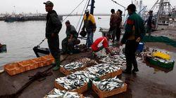 La Commission européenne va négocier un nouvel accord de pêche avec le