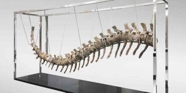 Un squelette de dinosaure trouvé au Maroc mis en vente pour reconstruire des écoles