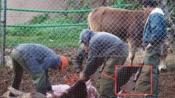Abattage d'un buffle dans son enclos au zoo du Belvédère, les internautes indignés, la direction du zoo