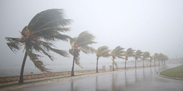 Palm trees sway in the wind prior to the arrival of the Hurricane Irma in Caibarien, Cuba, September...