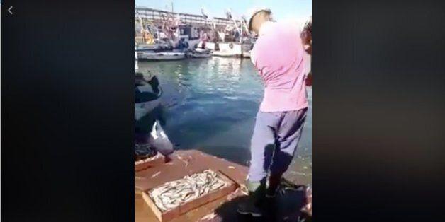 Affaire des sardines jetées à la mer à Mostaganem: poursuites et sanctions contre les mis en