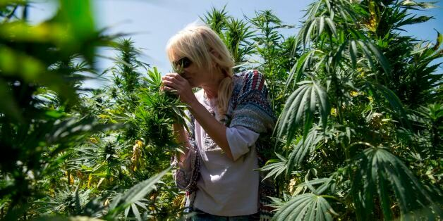 A German tourist smells cannabis plants as she stands in a cannabis field near the town of Ketama in...