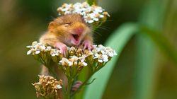 Les photos d'animaux sauvages les plus drôles et adorables de