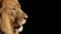 Après 20 ans d'absence, les Lions de l'Atlas peuvent enfin rêver de leur 5e Coupe du