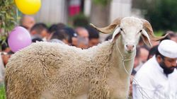 Les moutons reconnaissent Obama et Emma Watson à partir d'une