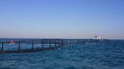 La ferme Aqua-parck pêche produira 600 tonnes de dorades et de loups de mer en