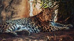 De nouvelles espèces animales au Jardin zoologique de