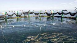 SIPA 2017: livraison d'un projet de schéma directeur pour la pêche et