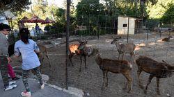Tunisie : Le zoo du Bélvédère accueille de nouveaux