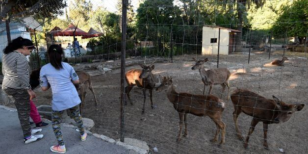 Tunisian visitors play with antelopes at the Belvedere Zoo, which was closed for renovation works following...