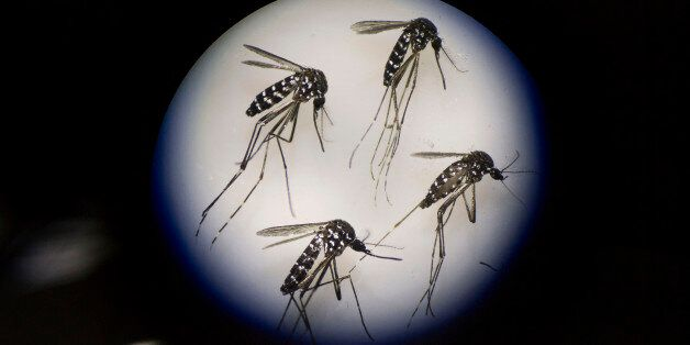 GUANGZHOU, CHINA - JUNE 21: Adult female mosquitos are seen uder a microscope at the Sun Yat-Sen University-Michigan...