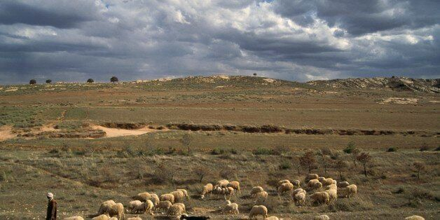 ALGERIA - MARCH 18: A flock of sheep and a shepherd, Djebel Amour mountain chain, Algeria. (Photo by...