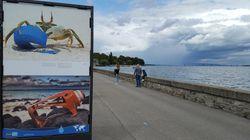 Préservons nos océans: une exposition pour sensibiliser le grand