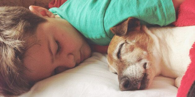 Boy sleeping with his dog, a female senior Jack Russell