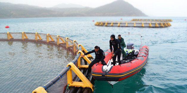 Chlef occupe la première place nationale en aquaculture