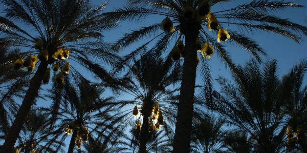 DOUZ, TUNISIA: Date palms are silhouetted at the El-Fawar oasis near the southern Tunisian town of Douz...