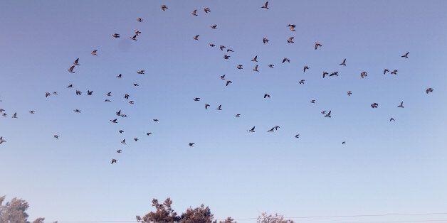 Les oiseaux de Kabylie et