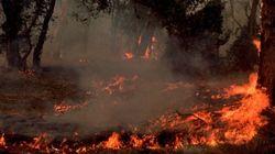 Chefchaouen: En passe d'être maîtrisé, un feu de forêt a déjà ravagé 150 hectares de