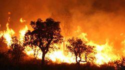 Feux de forêts: 9 morts et 26 personnes arrêtées entre le 20 juillet et le 13