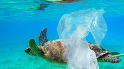 Les débris de plastique en mer confondus avec de la nourriture tuent des milliers de
