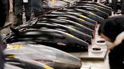 Pêche: l'Algérie se lance dans l'engraissement du thon
