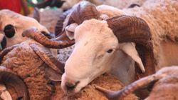 Mouton: Pas de baisse de prix à