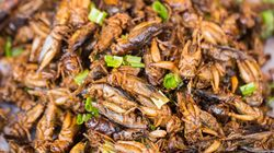 En Thaïlande, la gastronomie pour rendre les insectes à la