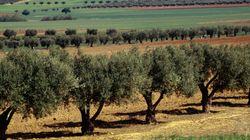 Agriculture: une production d'une valeur de 3.000 milliards