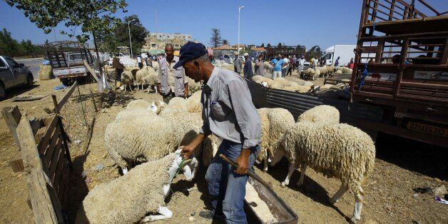 An Algerian vendor wait for customers at a livestock market in preparation for the upcoming Muslim Eid...
